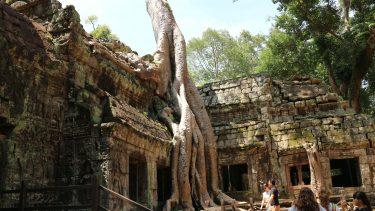 崩壊された遺跡「タ・プローム」観光
